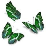 Three green butterfly stock illustration
