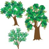 Three green leafy trees Royalty Free Stock Image