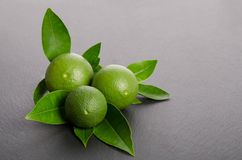 Three green limes with leaves on gray background. Three green limes with leaves on a gray background Stock Images