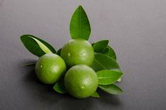 Three green limes with leaves on gray background. Three green limes with leaves on a gray background Royalty Free Stock Photos
