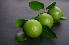 Three green limes with leaves. Three limes with leaves on black background Stock Images