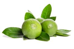 Three green limes with leaves. On white background Royalty Free Stock Image