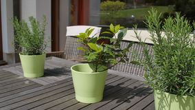 Three Green pail with flowers on brawn wooden table on window background in the garden stock footage