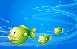 Three green piranhas under the sea Stock Photo