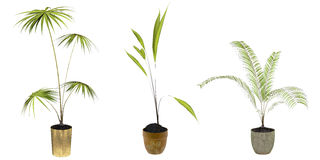 Three green plants Royalty Free Stock Photos