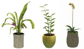 Three green plants in pots Stock Images