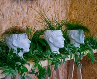 Three green plants in white pots in the shape of a human head on a background of plywood, a wooden shelf with lively vegetation, royalty free stock image