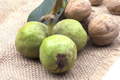 Three green ripe young walnut with a bunch of dry Stock Photos