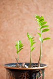 Three green sprout Royalty Free Stock Photos