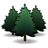 Three green spruce and their shadows for advertising and announcements. Christmas symbol. New Year. On a white. Background isolated. Vector illustration Stock Photography