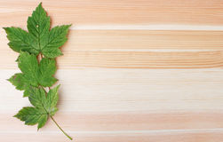 Three green sycamore leaves on a wooden background Royalty Free Stock Photos