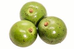 Three green thai avocado on white background. Three of green thai avocado on white background stock photo