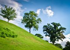 Three green trees on a hill side by side  Royalty Free Stock Image