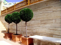 Three green trees. Landscape design Stock Photo