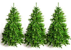 Three grenn fir trees Stock Photo