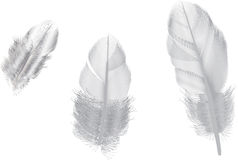 Three grey feathers isolated on white Royalty Free Stock Photos