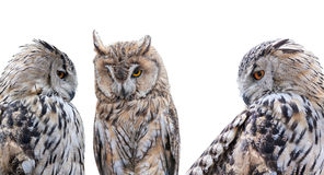 Three grey owls isolated on white background Stock Photography