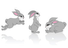 Three grey rabbits. Stock Photos