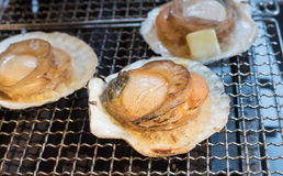 Three grilled scallop on a bbq grill Royalty Free Stock Photo