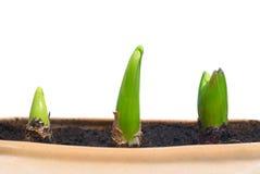 Three growing plants royalty free stock photos