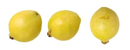 Three guava Royalty Free Stock Image