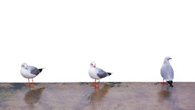 Three gulls Stock Image