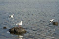 Three gulls Stock Images
