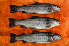 Three gutted trouts. Three fresh gutted trouts on a wooden board Royalty Free Stock Images