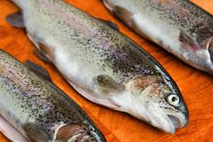 Three gutted trouts Royalty Free Stock Photo