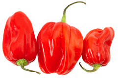 Three habanero's in different sizes. Three habanero's or Satan's peppers in differnt sizes isolated on white Stock Images