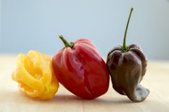 Three habanero very hot chili peppers in a row, ripened capsicum chinenses on wooden table royalty free stock photography