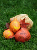 Three Halloween pumpkins on green grass royalty free stock photo