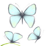 Three Hand Drawn Delicate Blue Butterflies Stock Photos