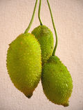 Three hanging kamansi fruits Stock Image
