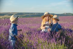 Three happy children in lavender field stock photography