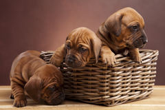Three happy dogs sitting on wooden floor. Three happy dogs on wooden floor in basket royalty free stock photos
