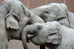 Three happy elephants Stock Image