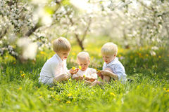 Three Happy Little Children Picking Flowers in Meadow Royalty Free Stock Image