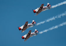 Three Harvards in a dive Royalty Free Stock Photography