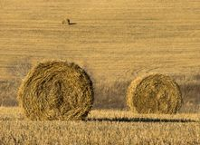 Haystack in the field on a Sunny day royalty free stock image