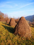 Three haystacks prepared on meadow Royalty Free Stock Photos