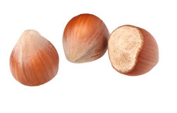 Three hazel nuts isolated. On white with no shadows stock photos