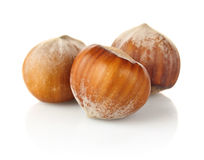Three hazelnut Stock Photos