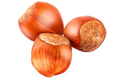 Three hazelnut isolated on white background. Hazelnut. Fresh organic filbert isolated on white background as package design element. Nut macro stock images