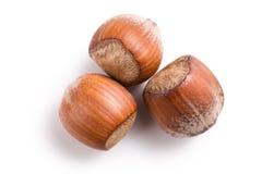 Three hazelnuts Stock Photography