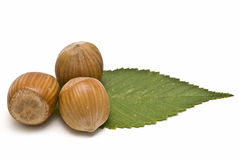 Three hazelnuts with a leaf. Royalty Free Stock Images