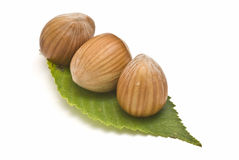 Three hazelnuts on a leaf. Stock Photos