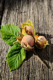 Three hazelnuts Stock Photography