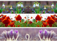 Three header site  springtime Royalty Free Stock Images
