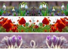 Three header site springtime. Flower snowdrop poppy panoramic royalty free stock images